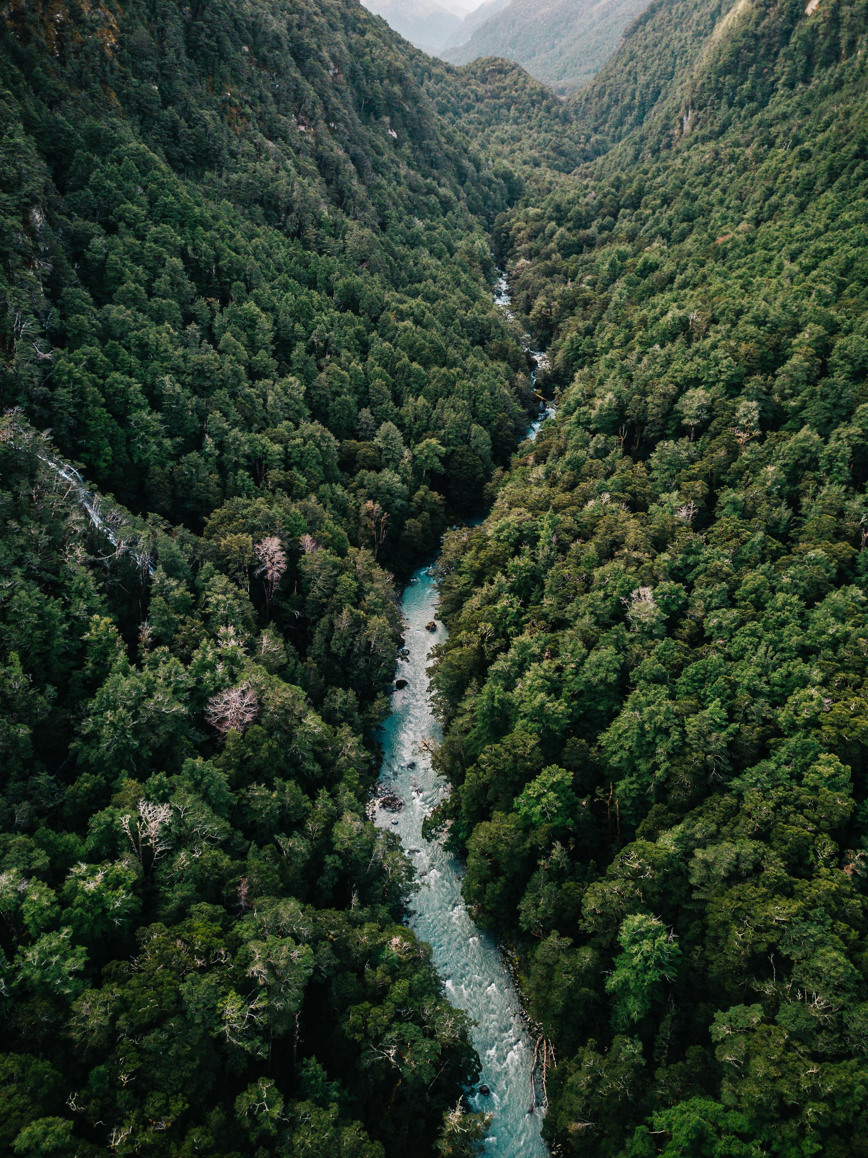 Regnskoven - også din skov